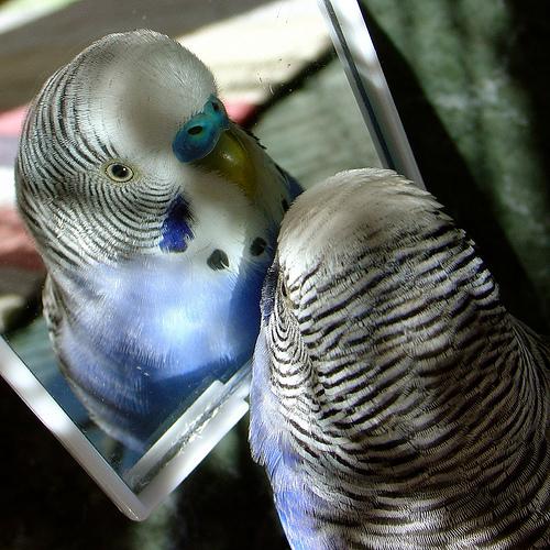 зеркало для попугая ветклиника МосВет Помощь