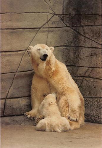 Cute funny Polar bear and cub