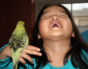 parakeets as childrens pets